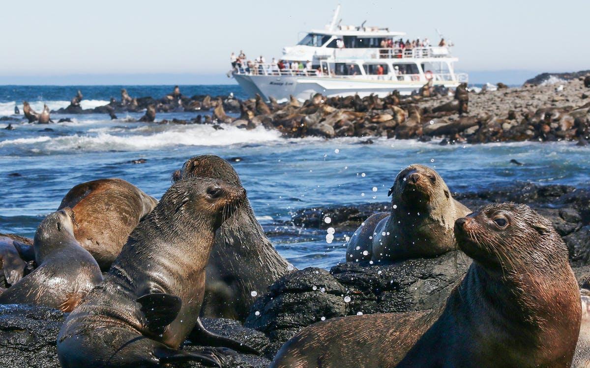 phillip island seal watching cruise-0