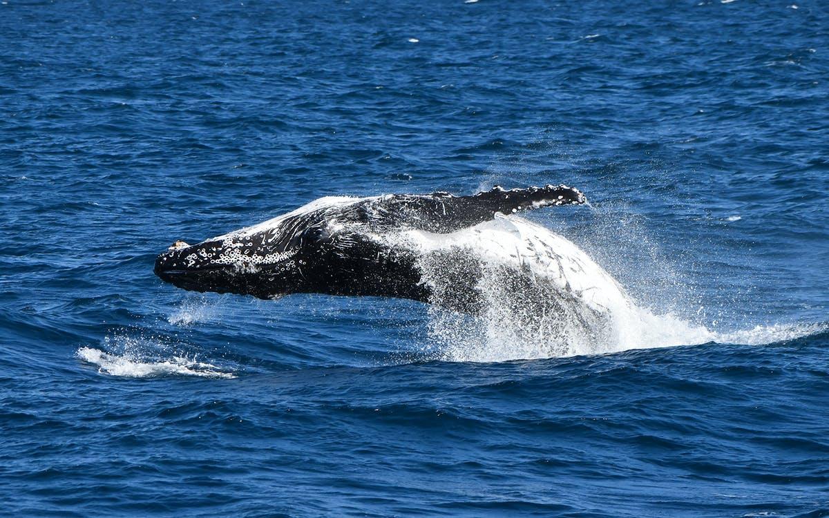 phillip island dolphin & whale cruise-0