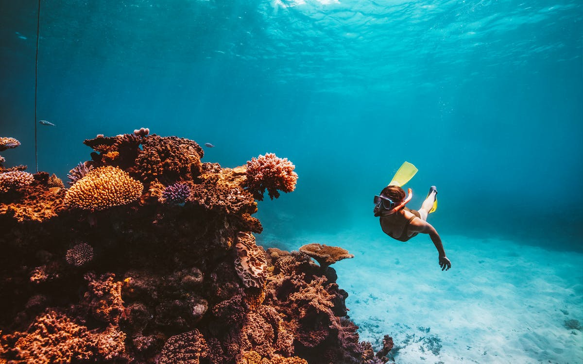 dreamtime dive & snorkel experience from cairns-0