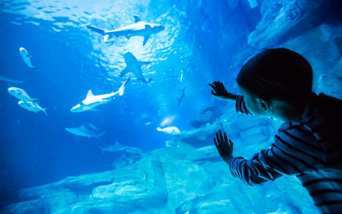 entry ticket to the aquarium de paris-0