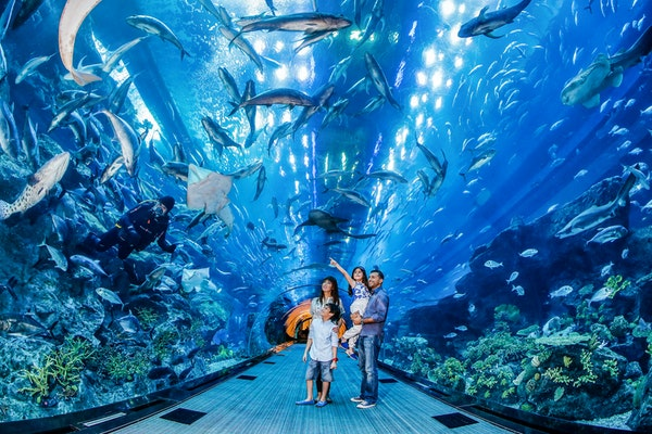Dubai Aquarium & Underwater Zoo reopening Post Coronavirus
