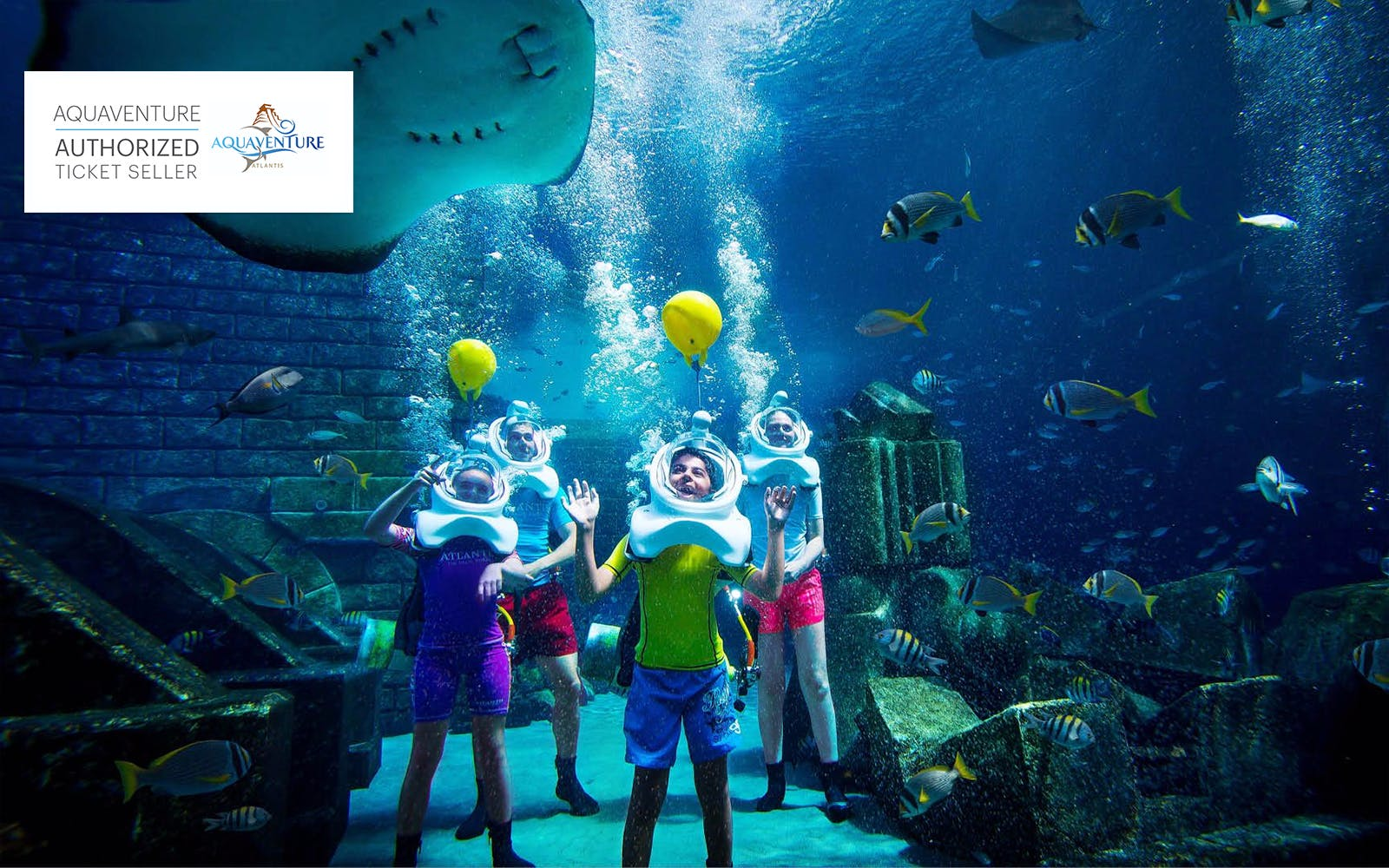 shark safari with aquaventure tickets-2
