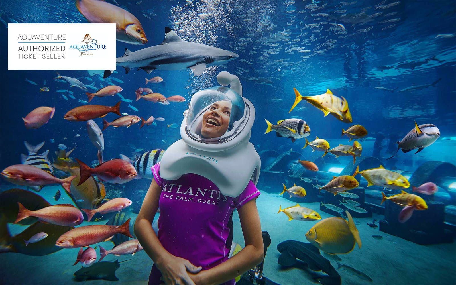 Shark Safari with Aquaventure Tickets