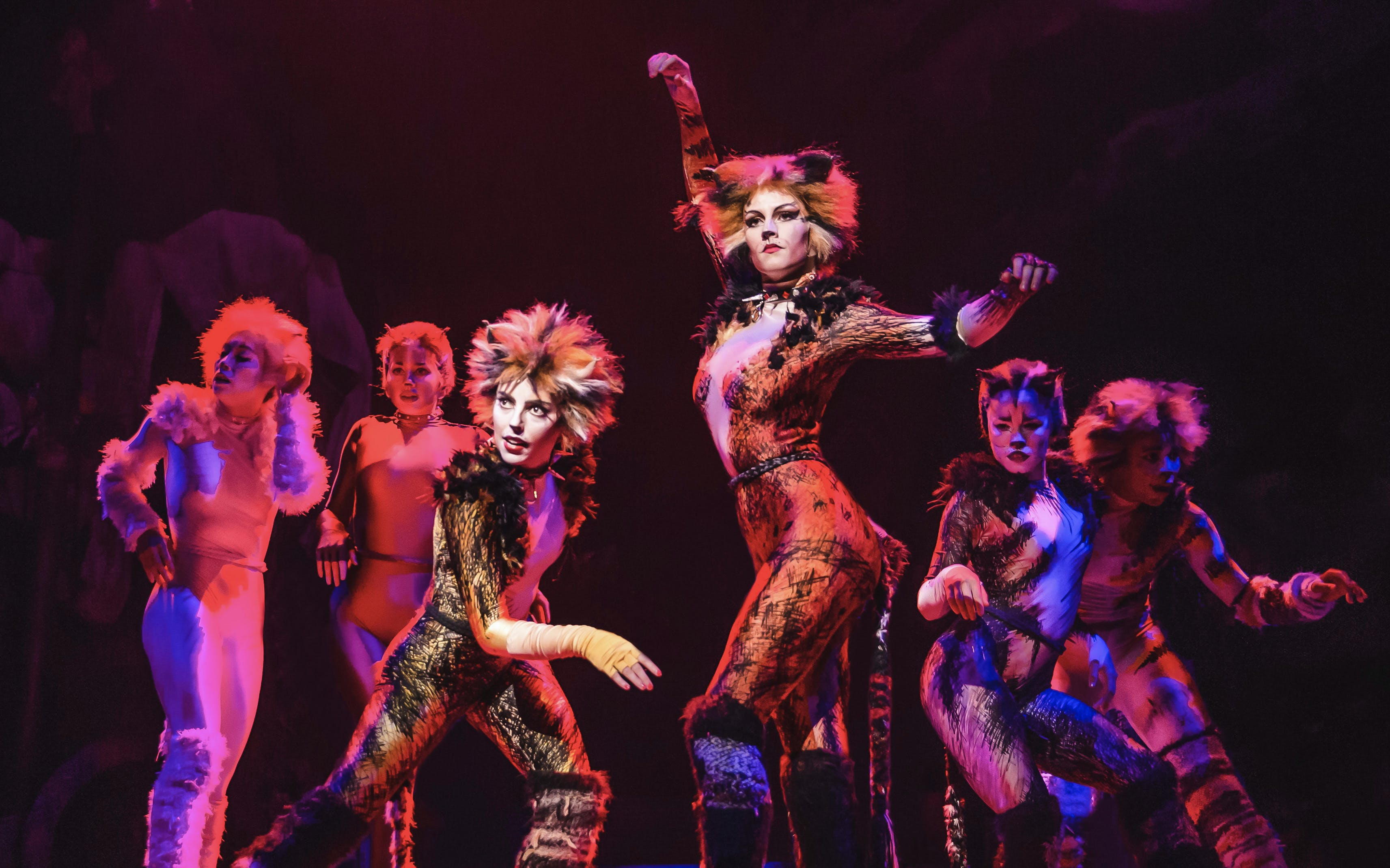 cats the musical-4