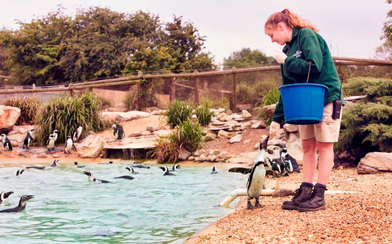 zsl london zoo: admission tickets-4