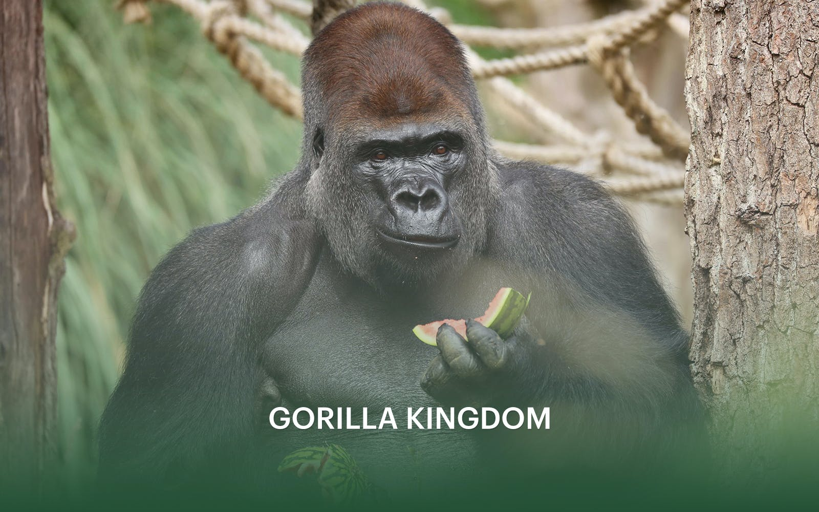 zsl london zoo: admission tickets-5