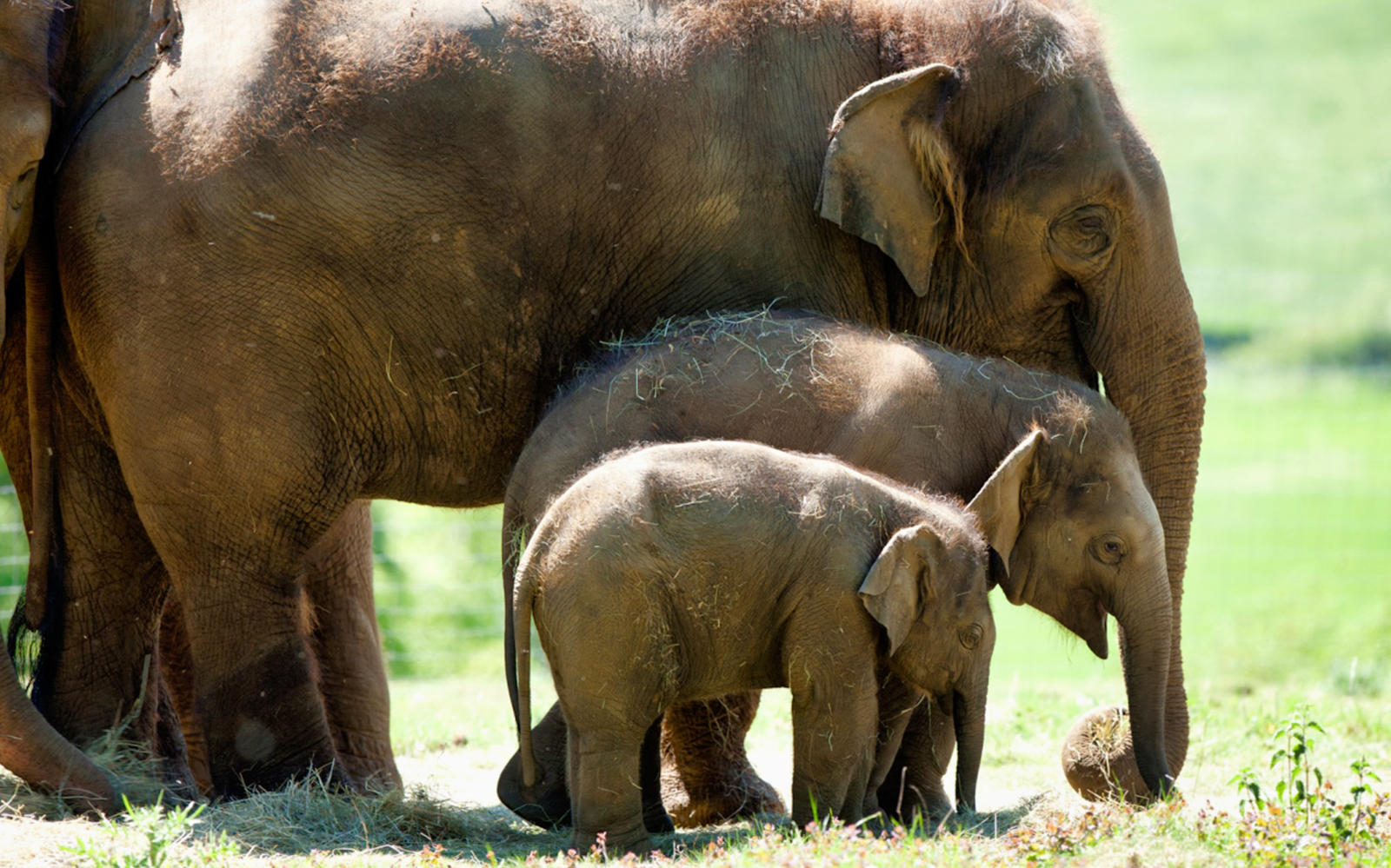 5da176f2 cd36 4a61 ad15 407dbabe0f9d 2830 london zsl london zoo  admission tickets 03