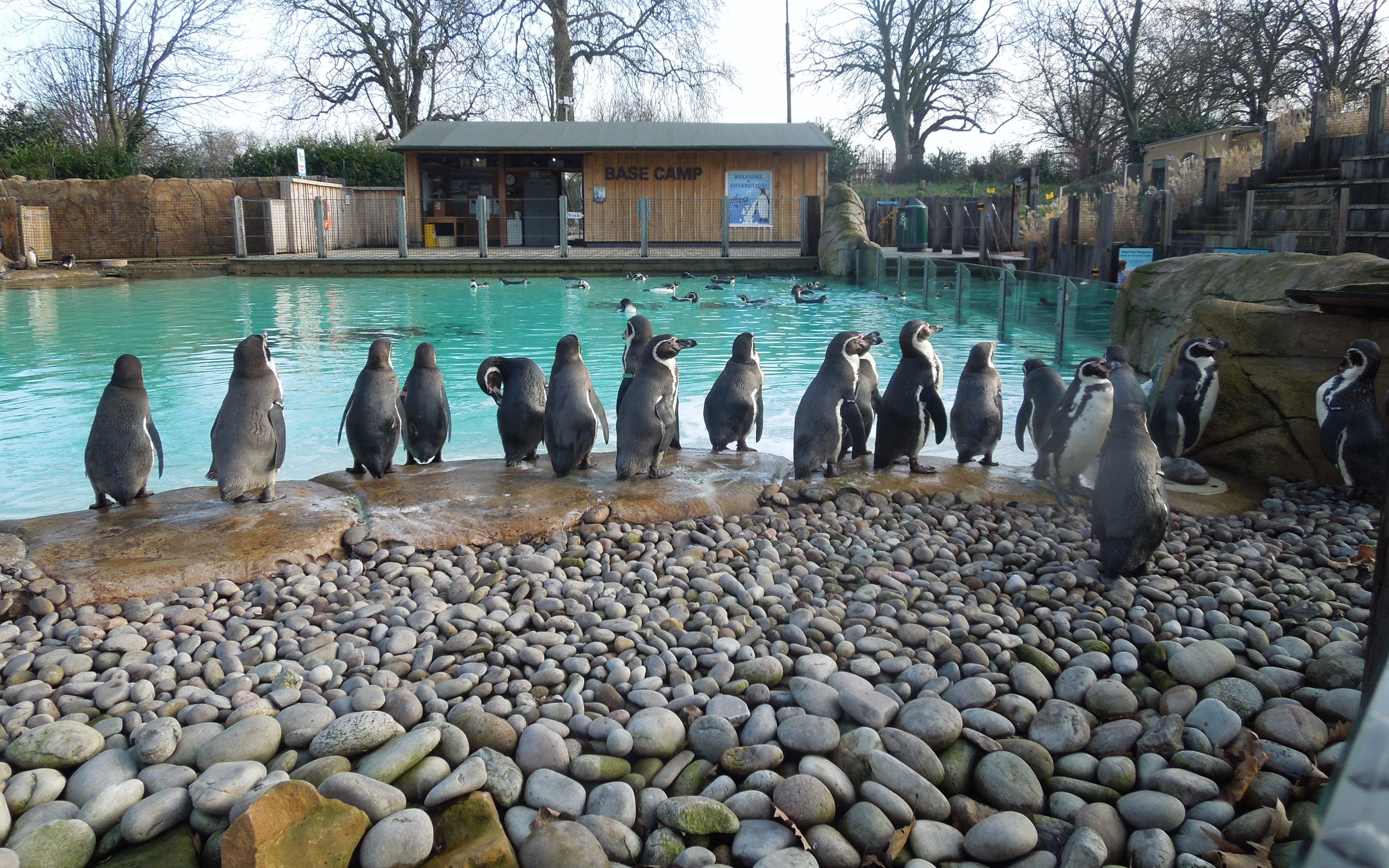 london zoo: admission tickets-3