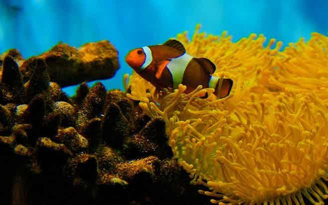 Barcelona in 5 days - barcelona aquarium