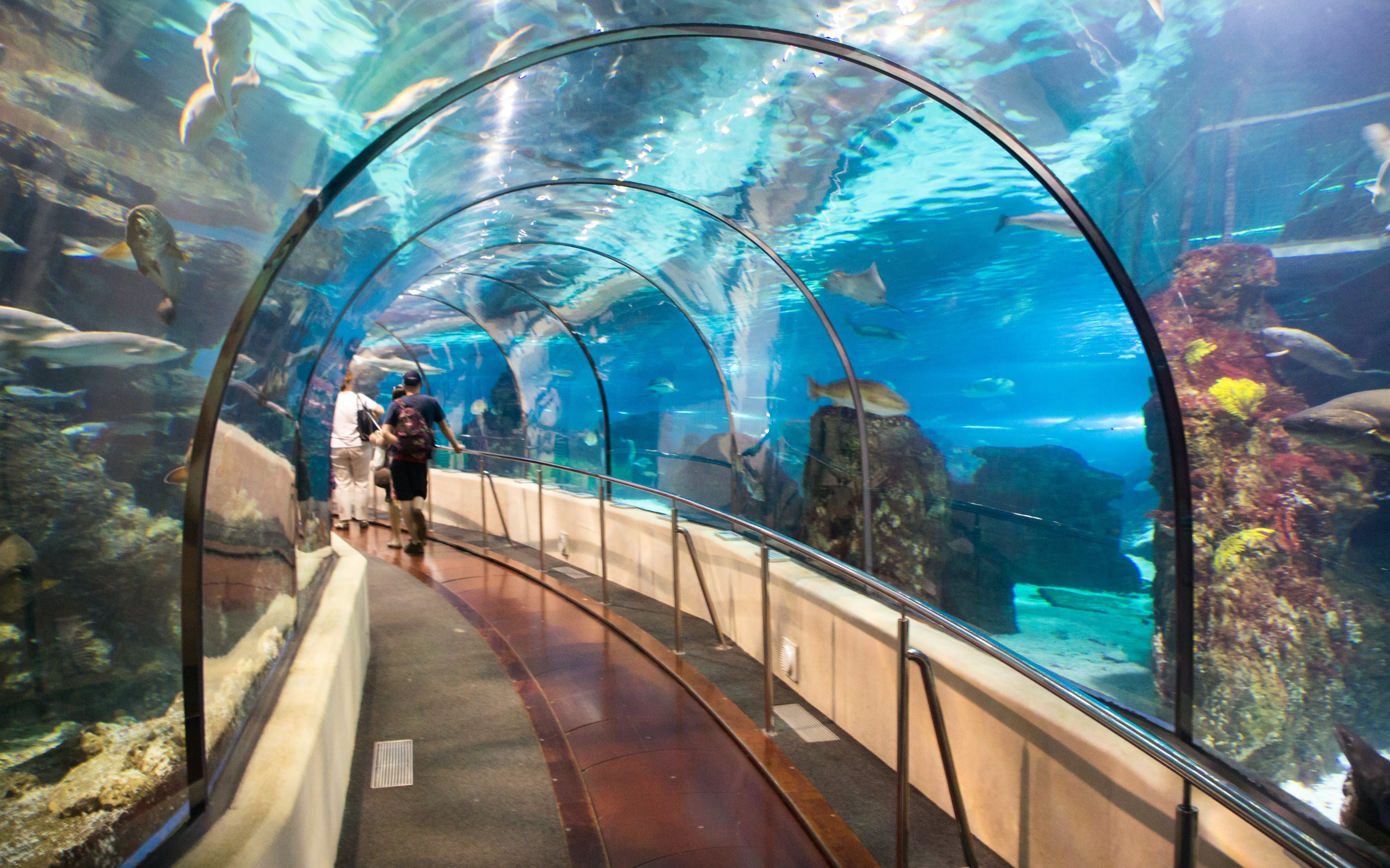 fast track tickets to barcelona aquarium-6
