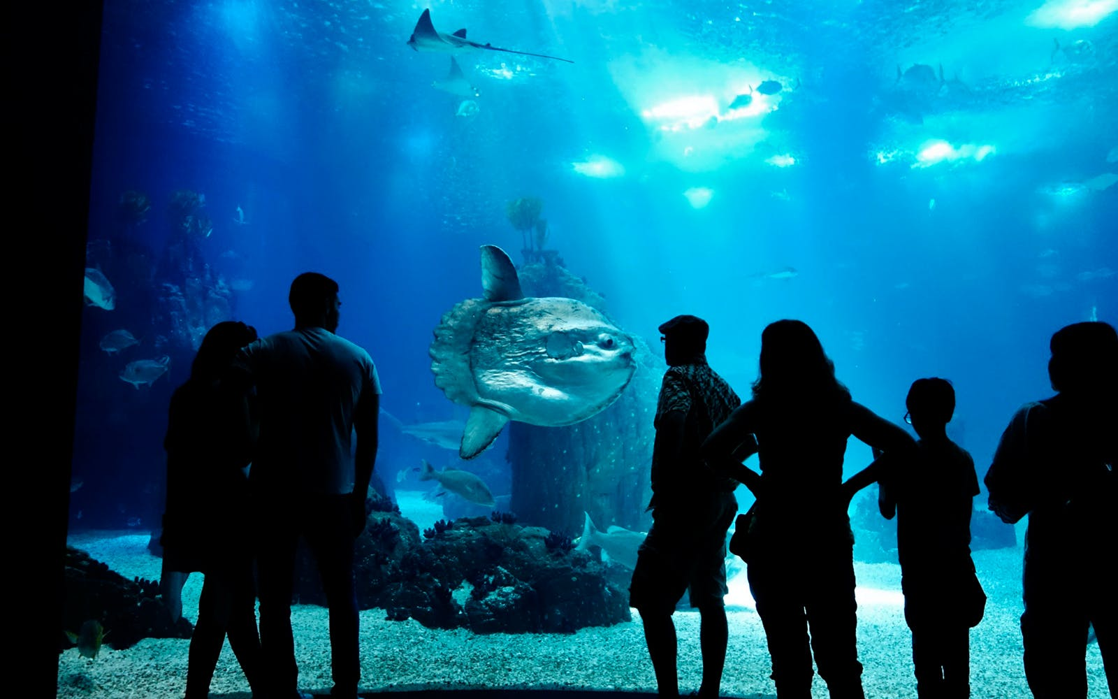 fast track tickets to barcelona aquarium-3