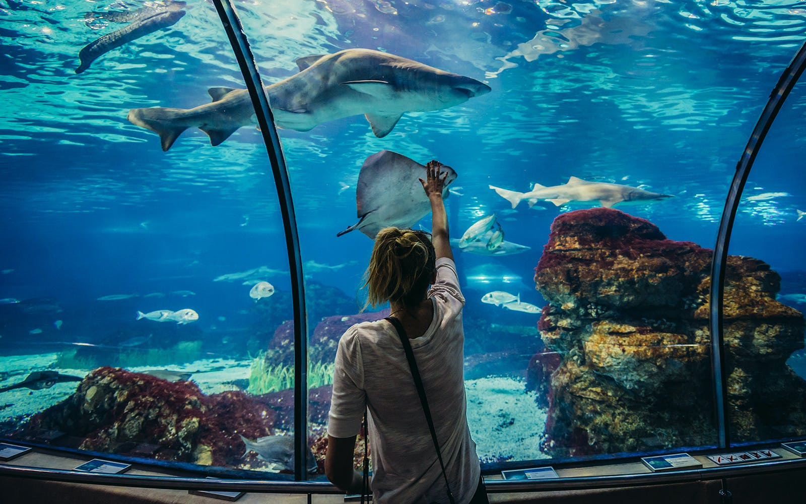 Fast Track Tickets to Barcelona Aquarium