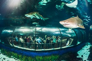 1 day in Barcelona-Barcelona Aquarium