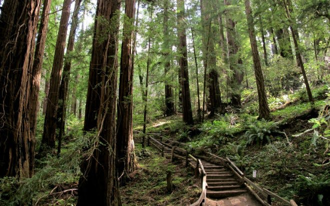 Muir Woods Tour