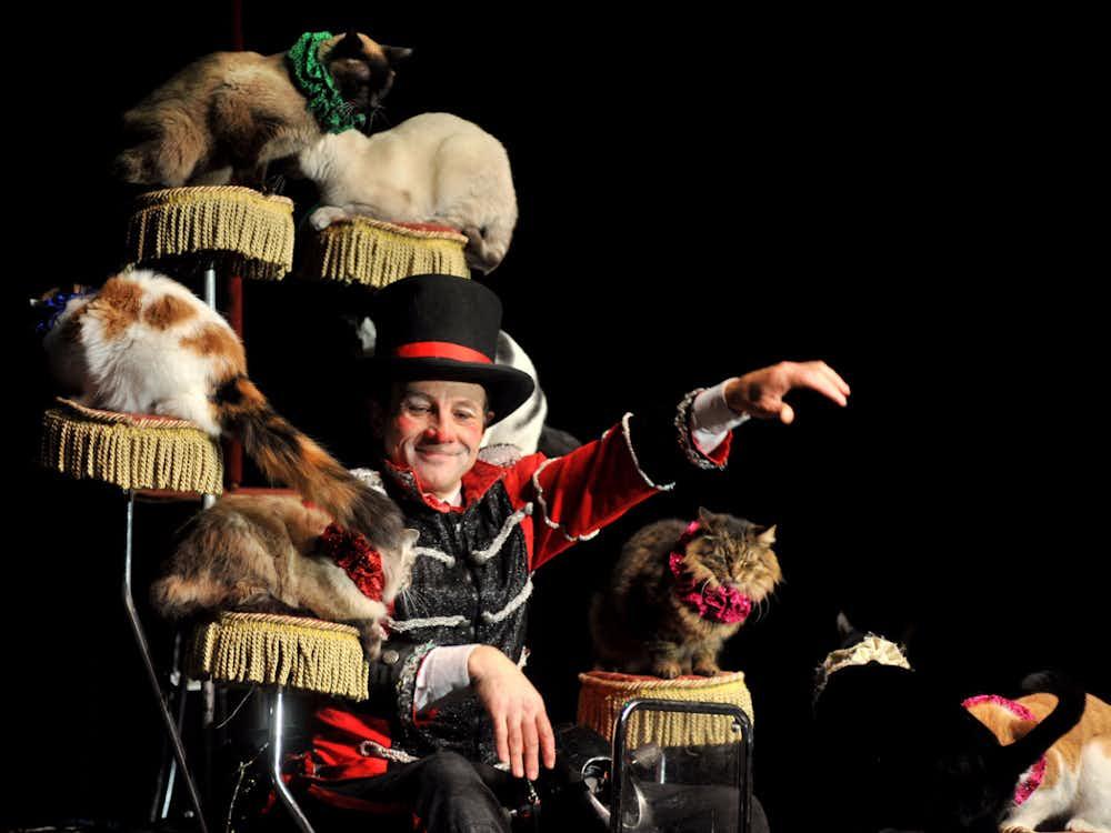 Popovich Comedy Pet Theater Las Vegas Tickets