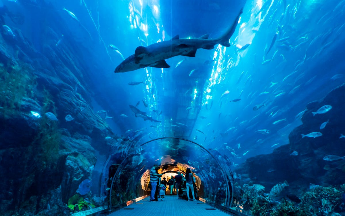 dubai city tour, aquarium & burj khalifa tickets combo-3
