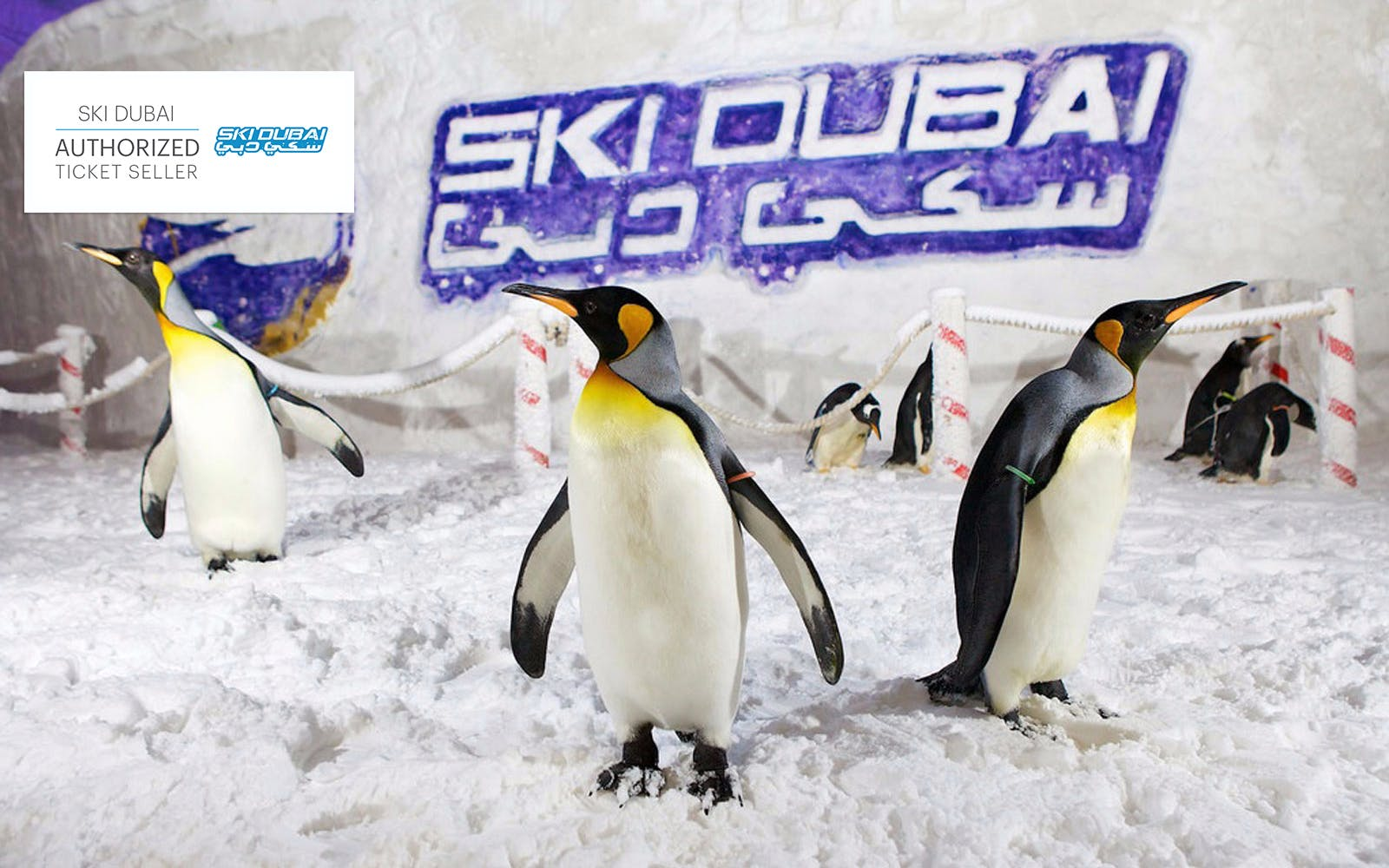 Ski Dubai: Penguin Pass (Meet the Penguins)