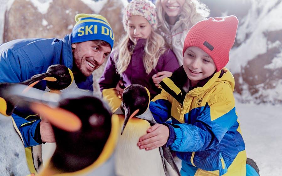 ski dubai: penguin encounter-1