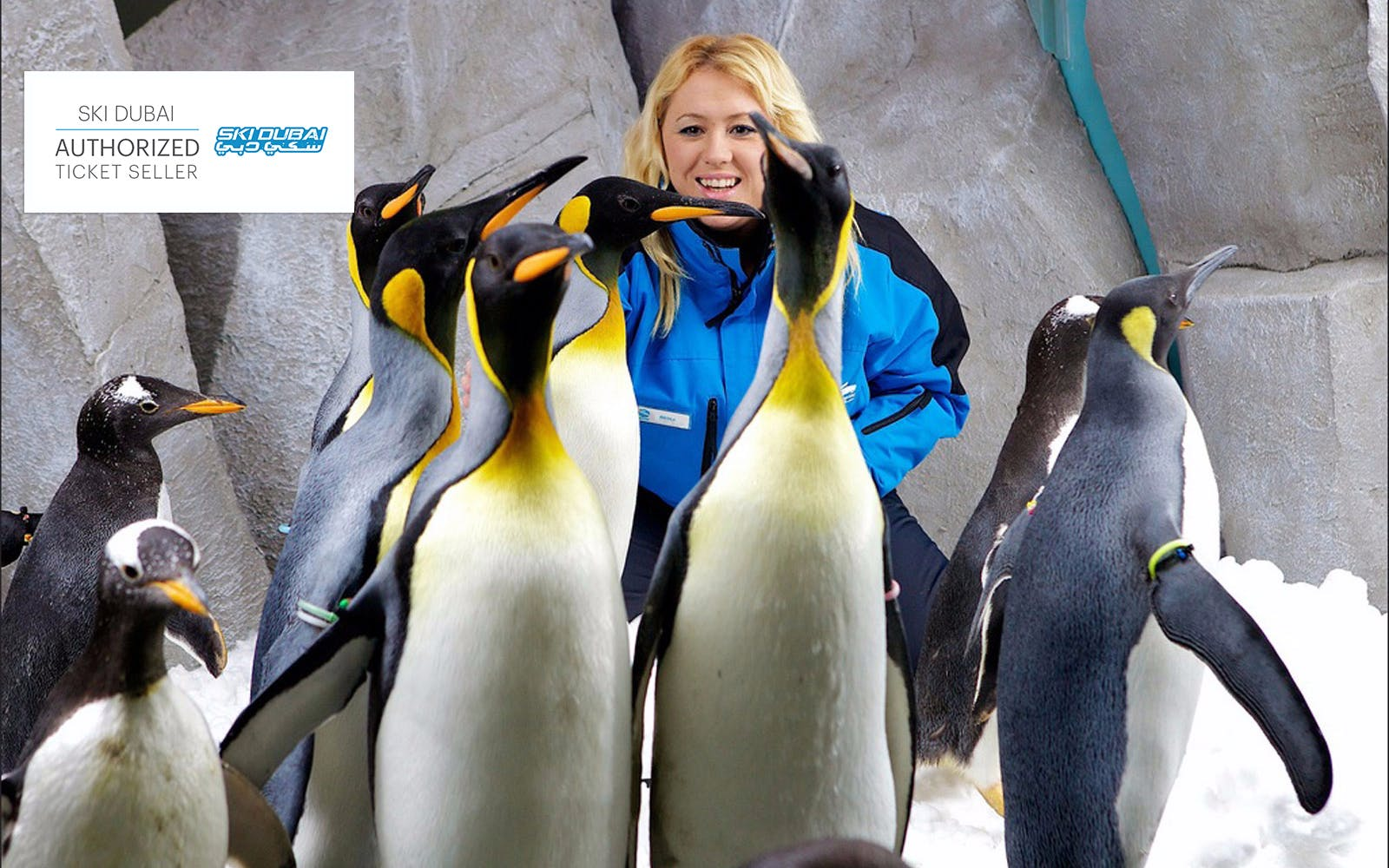 ski dubai: penguin pass (meet the penguins)-2