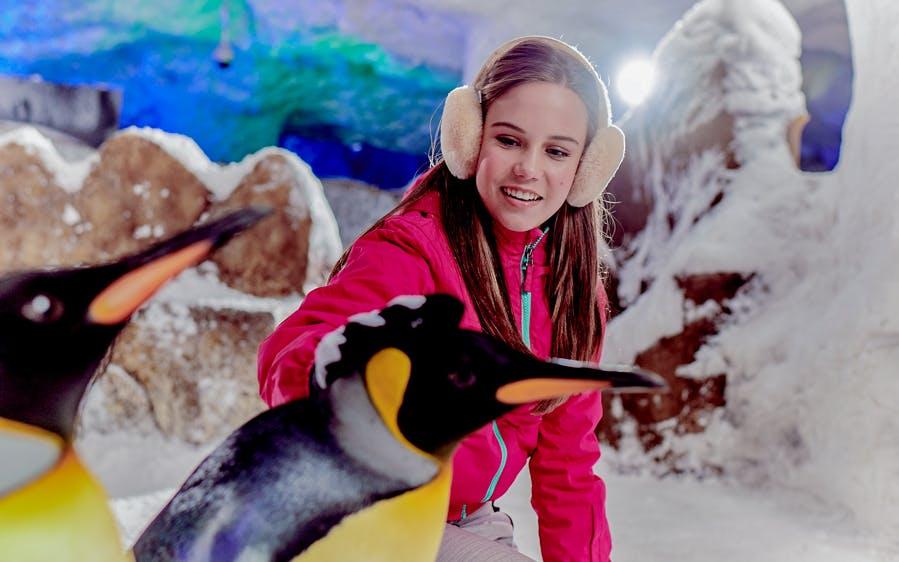 ski dubai: penguin encounter-0