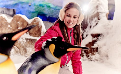 Ski Dubai: Penguin Encounter