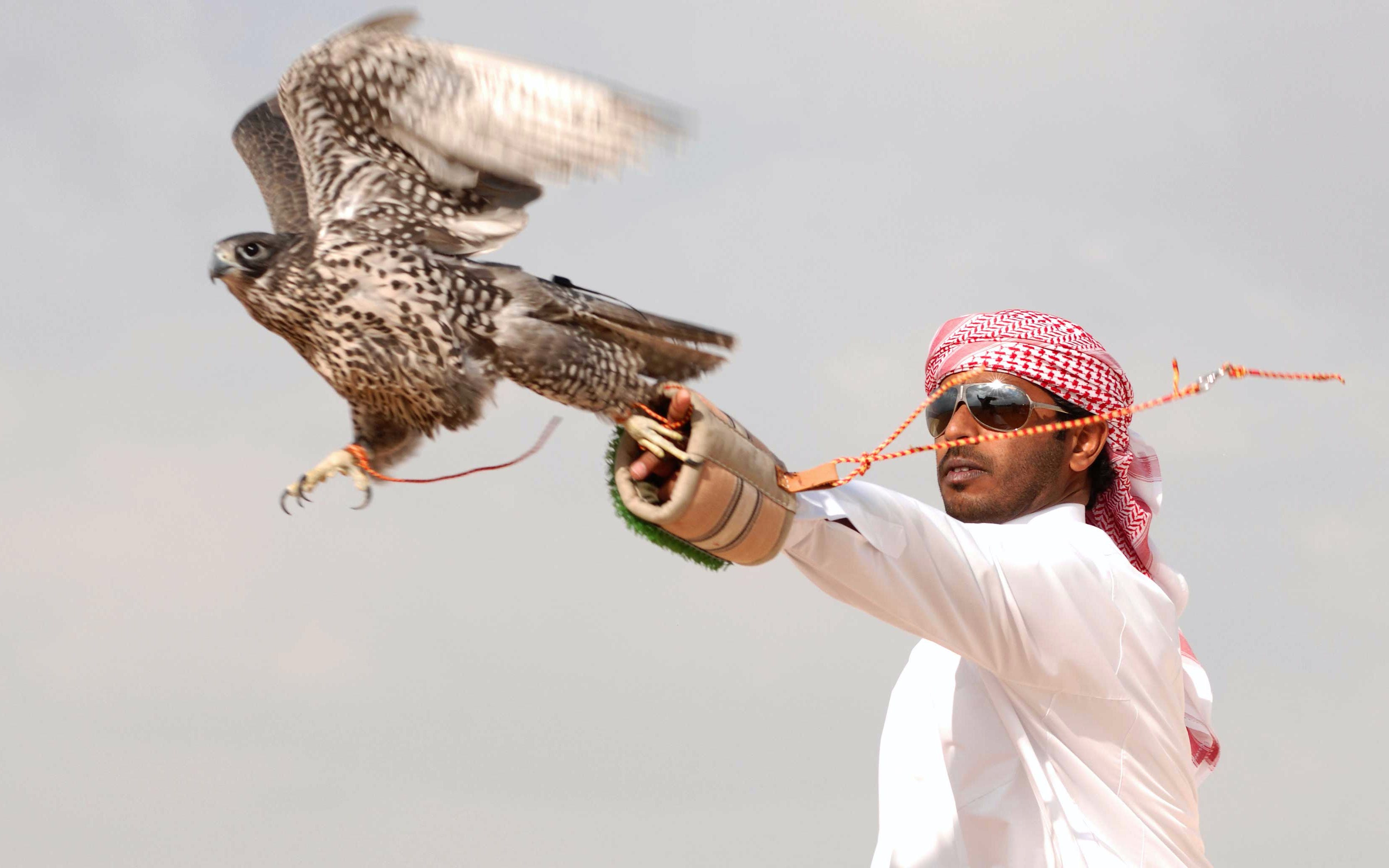 luxury-desert-safari-dubai-falcon
