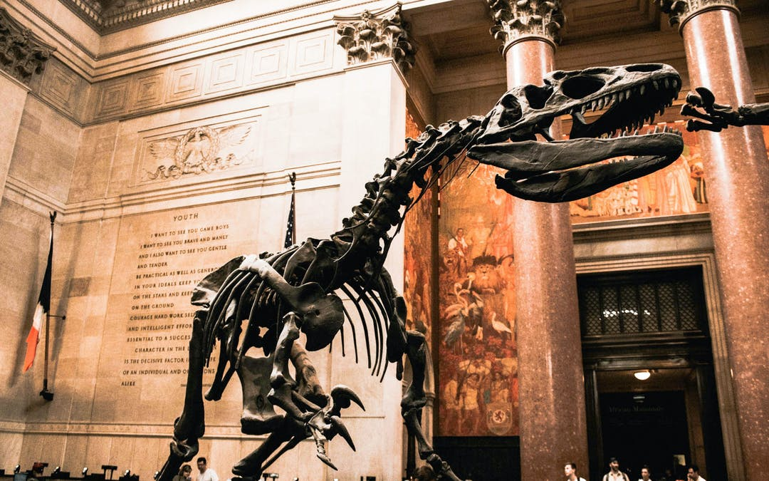 american museum natural history new york free admission