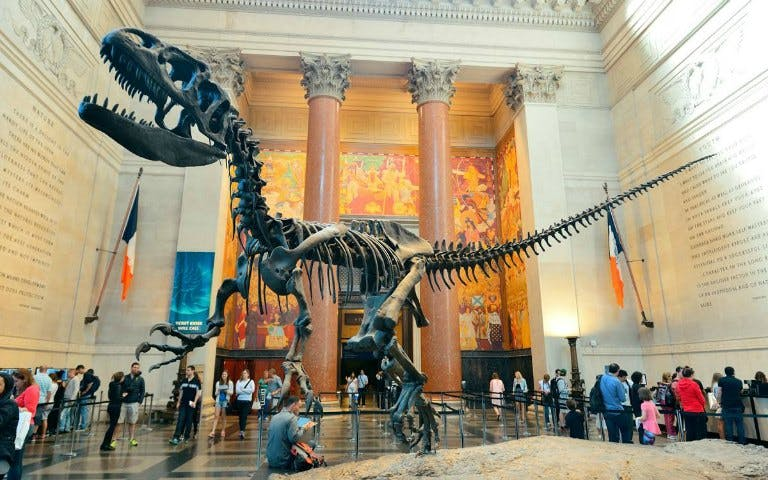 Planning a trip to NYC - American Museum of Natural History